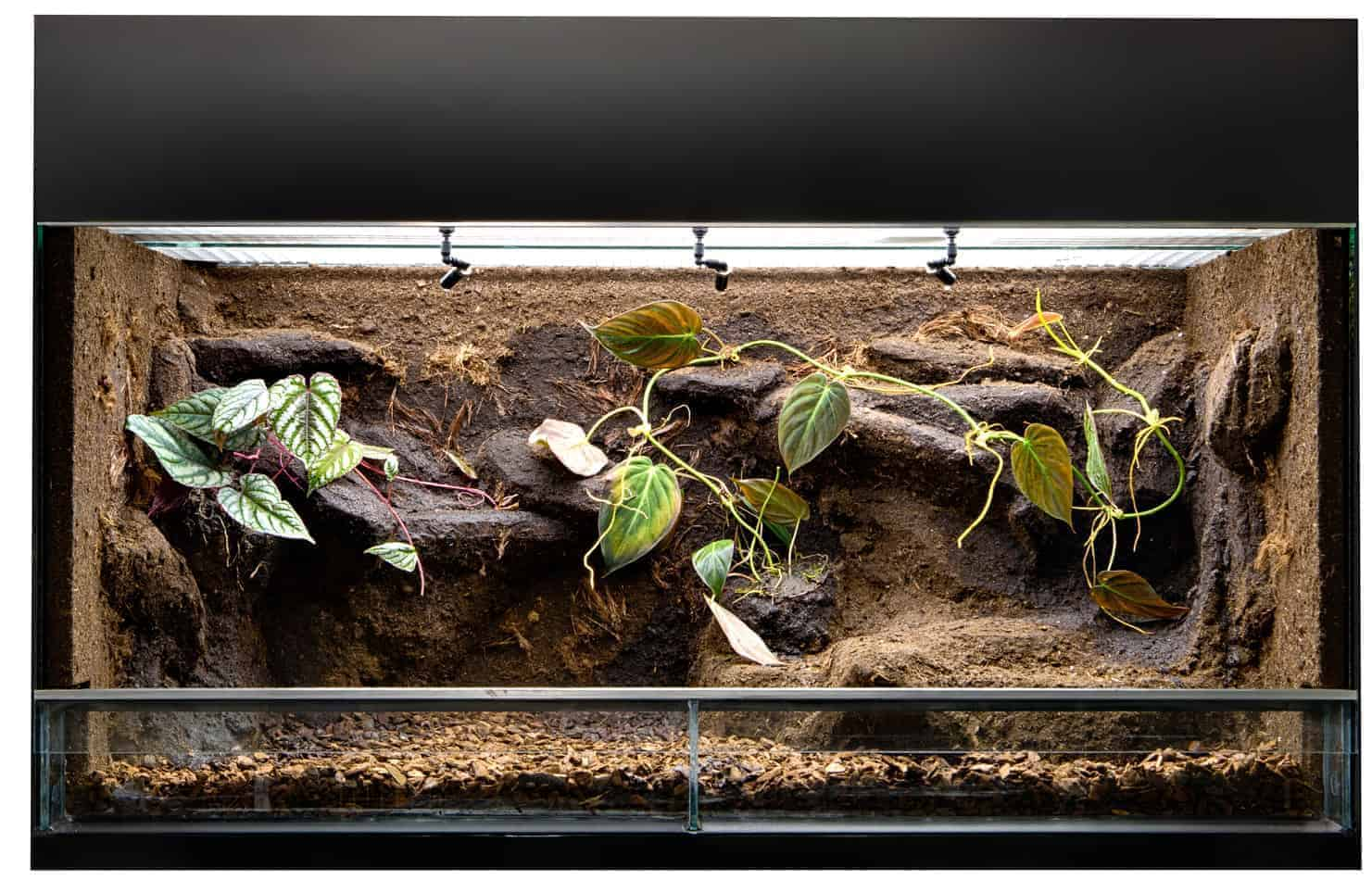 Recommended Terrarium Size for a Red-Tailed Boa