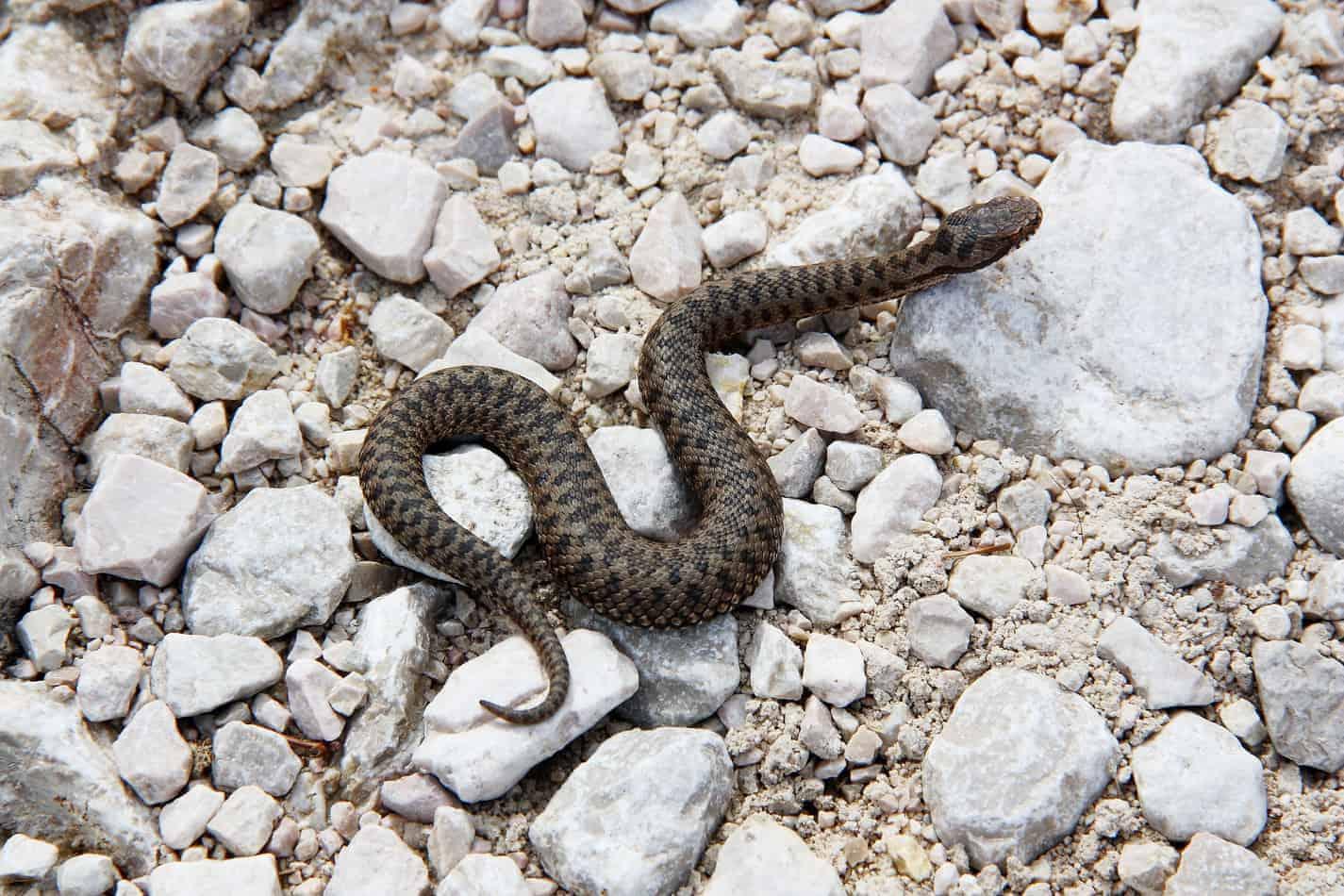 What Snake Killed Cleopatra? Homework Help!