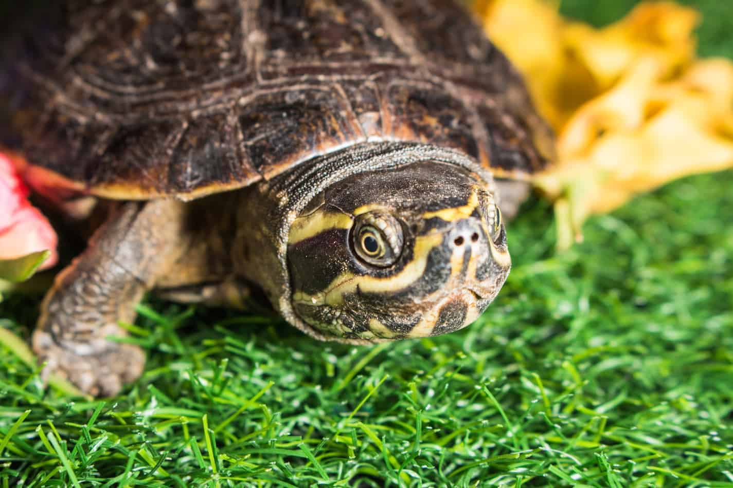 Can Snakes and Turtles Live Together?