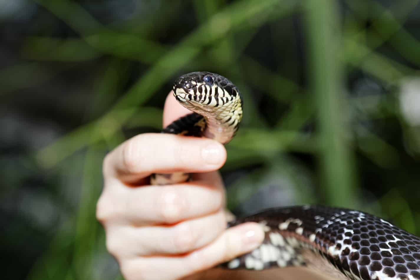 Do Pet Snakes Like to Be Petted?