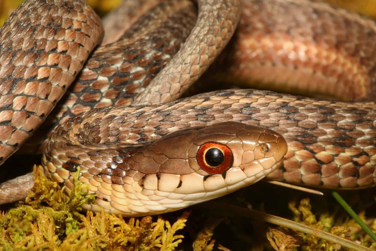 What Do Garter Snakes Eat?