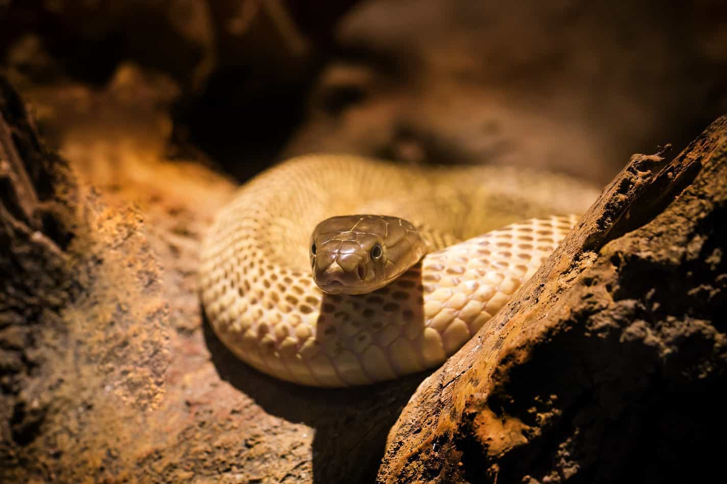 Where to Buy a Pet Snake (Explained!)