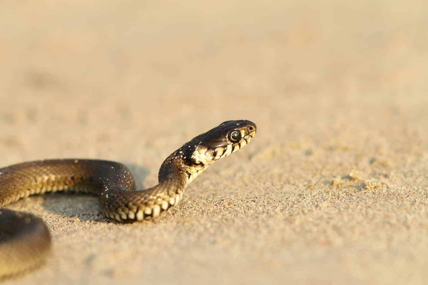 Why Don't Snakes Have Arms?