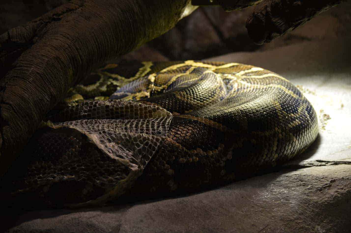Best Heat Lamps for Ball Pythons