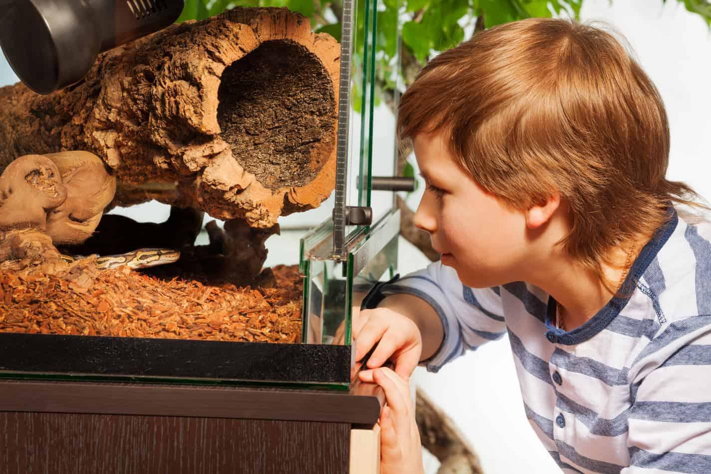 best hiding houses for ball pythons