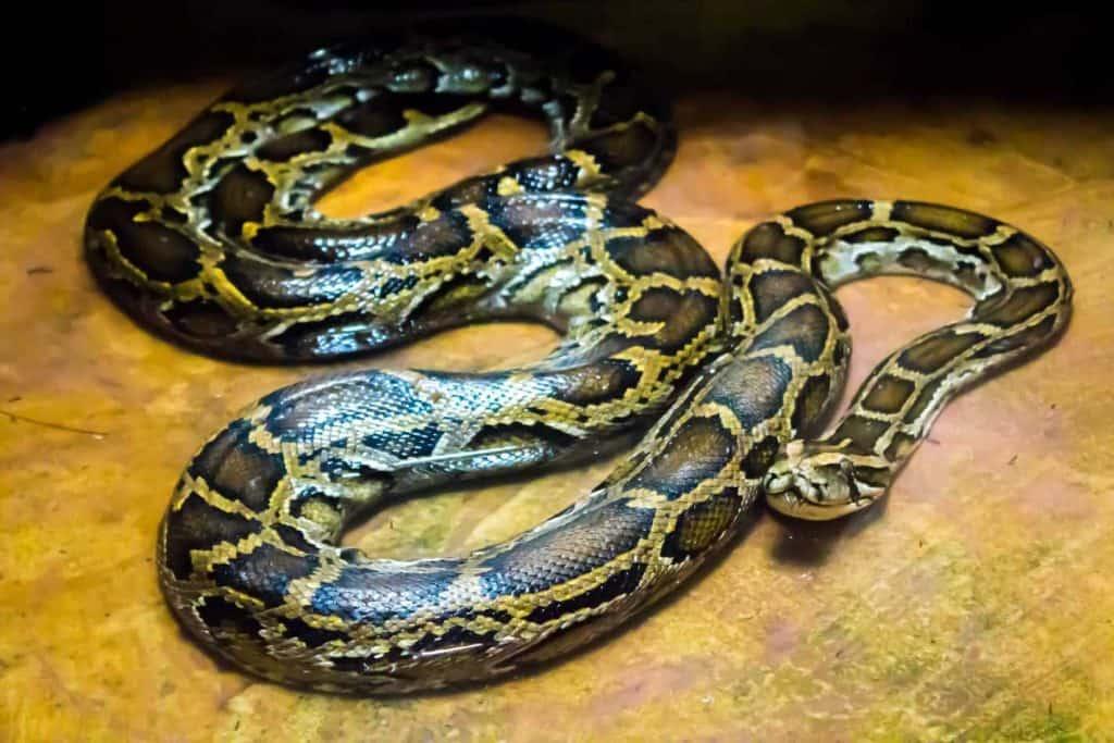 Are Pet Snakes Haram? – Embora Pets