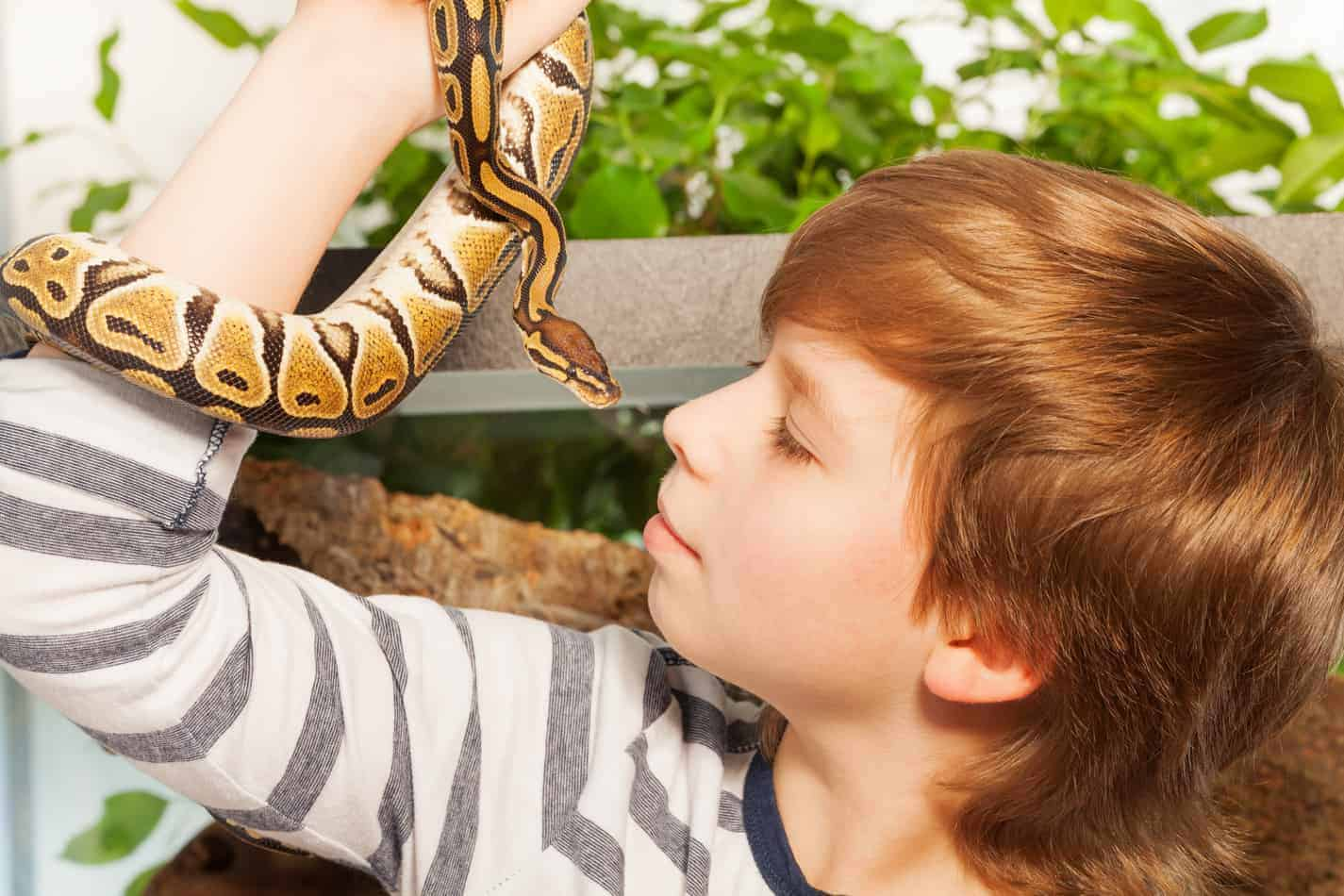Can Pet Snakes Recognize Their Owners?