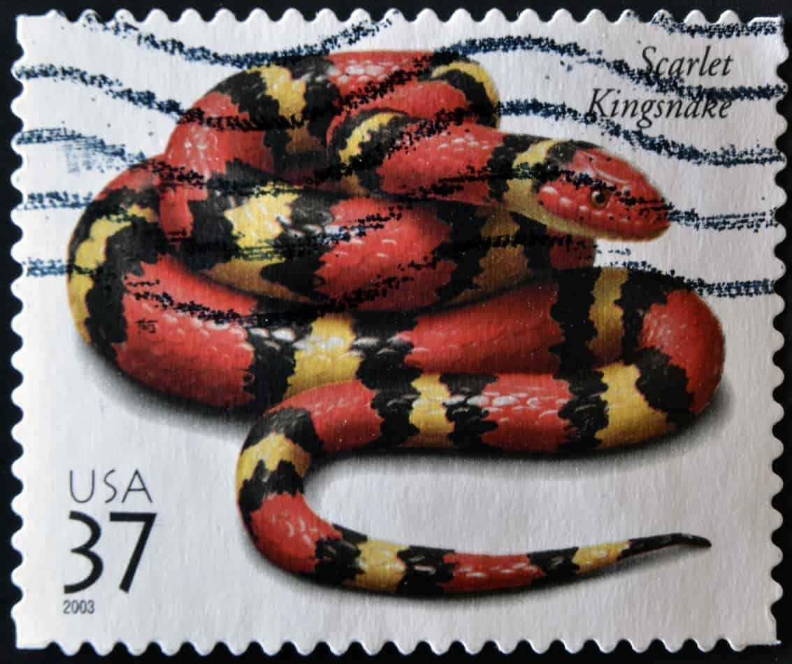 Scarlet King Snakes: Habitat, Diet, and 6 Interesting Facts