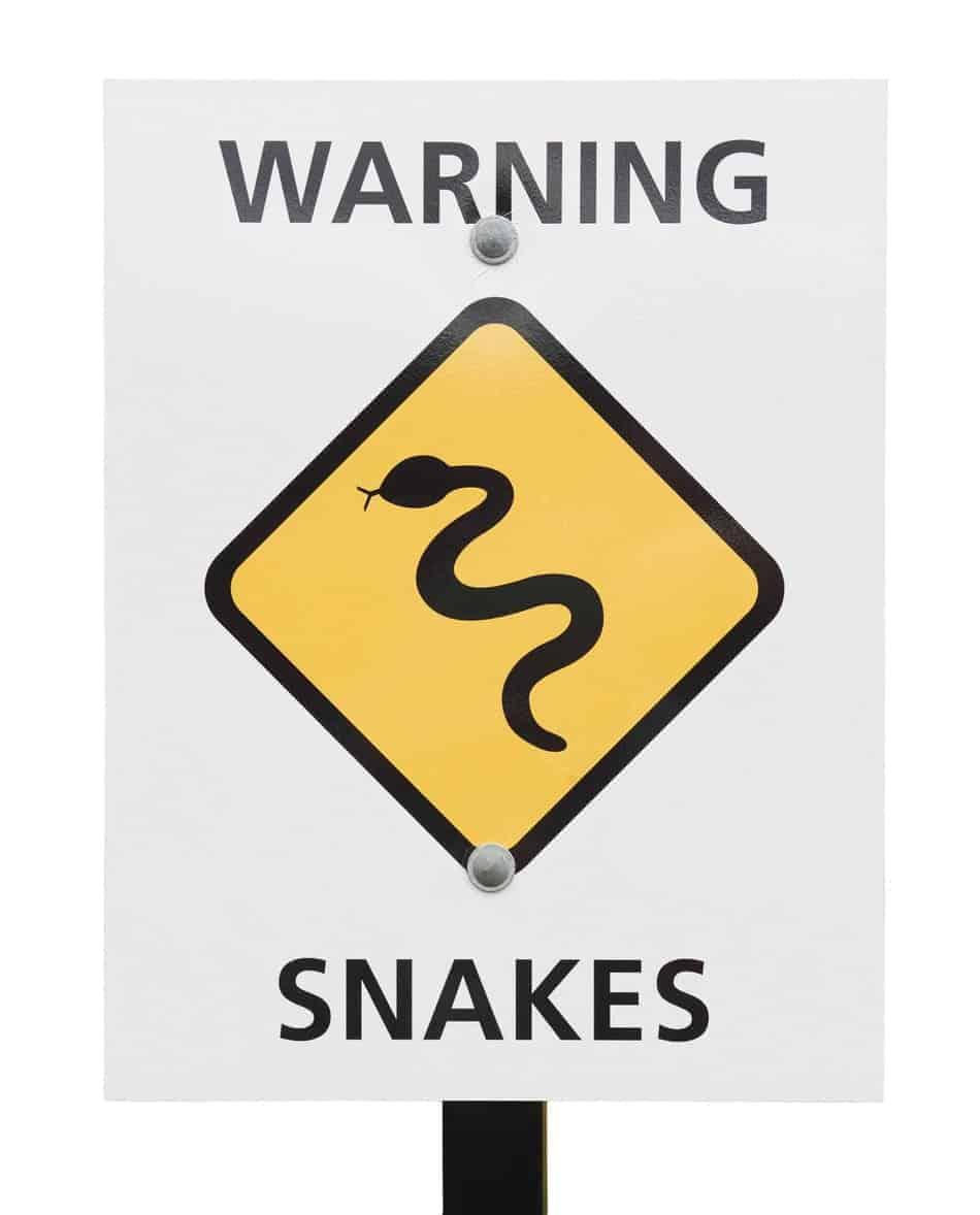 Non-Venomous Snake Bite Symptoms