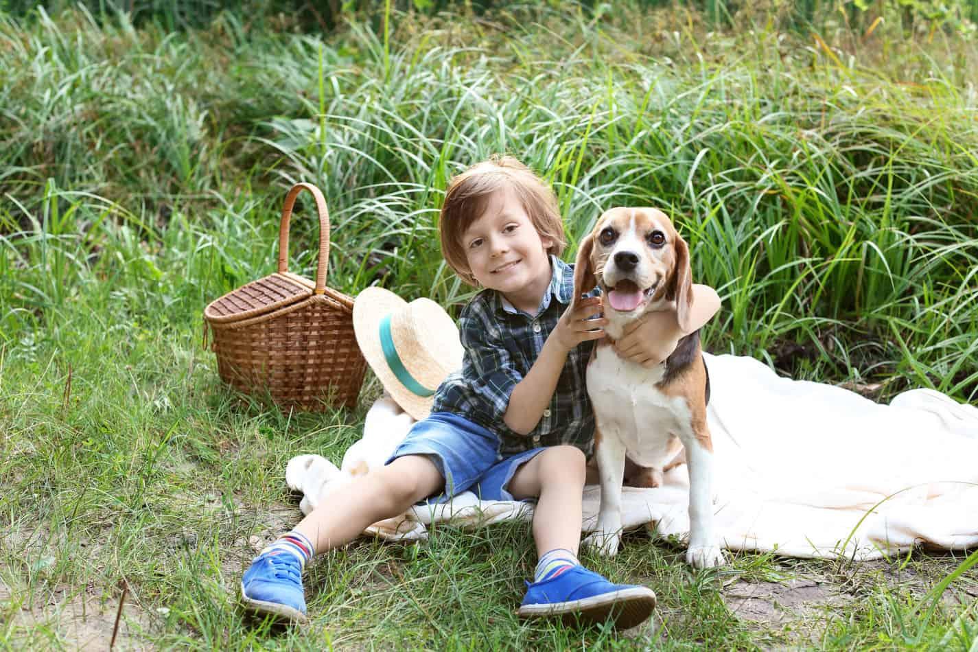 Can Beagles Eat Peanut Butter?