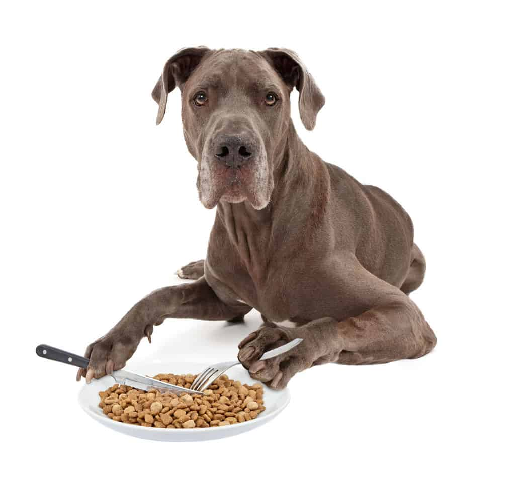 The Ultimate Guide to What Great Danes Can (And Can't) Eat
