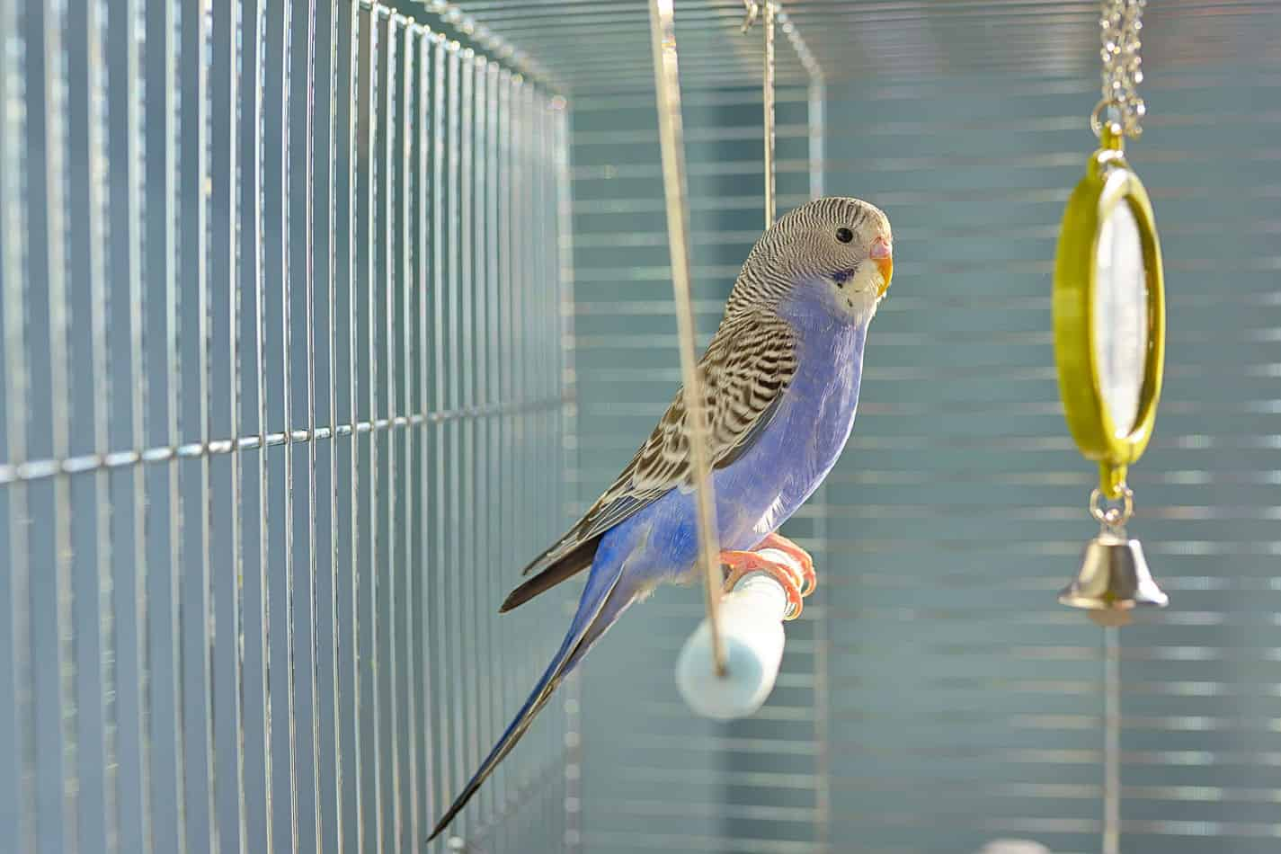 These are the Best Bird Cages for Parakeets in a Home