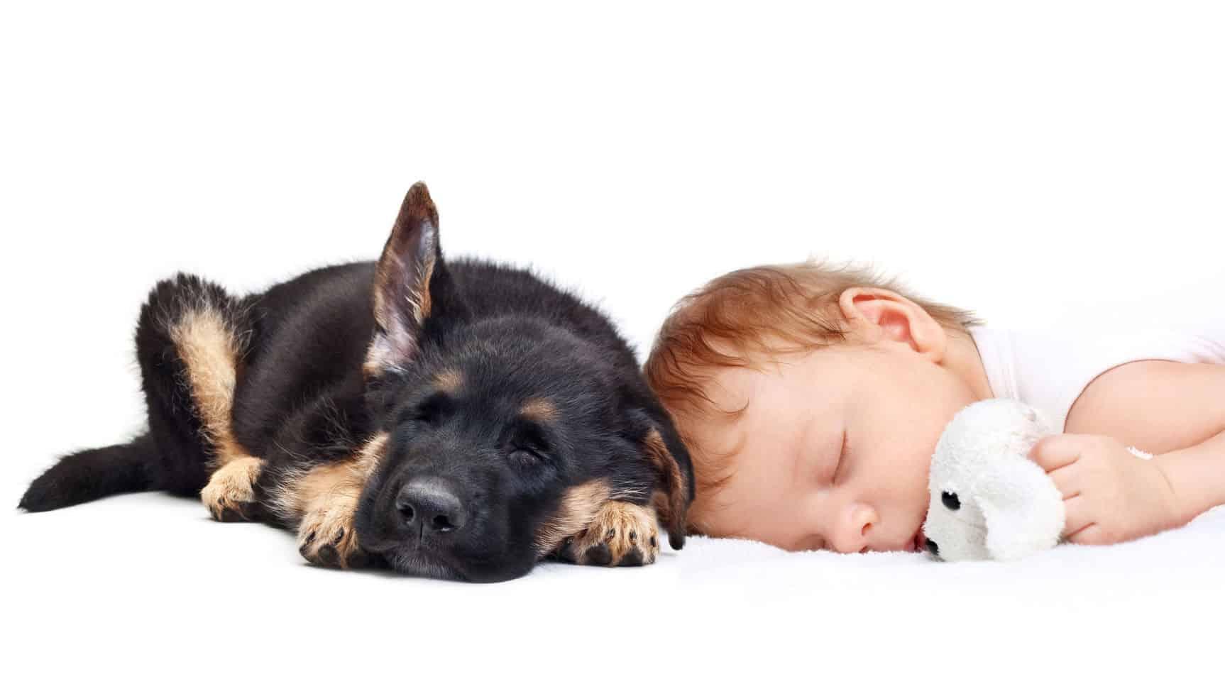 Are German Shepherd Puppies Good With Kids?
