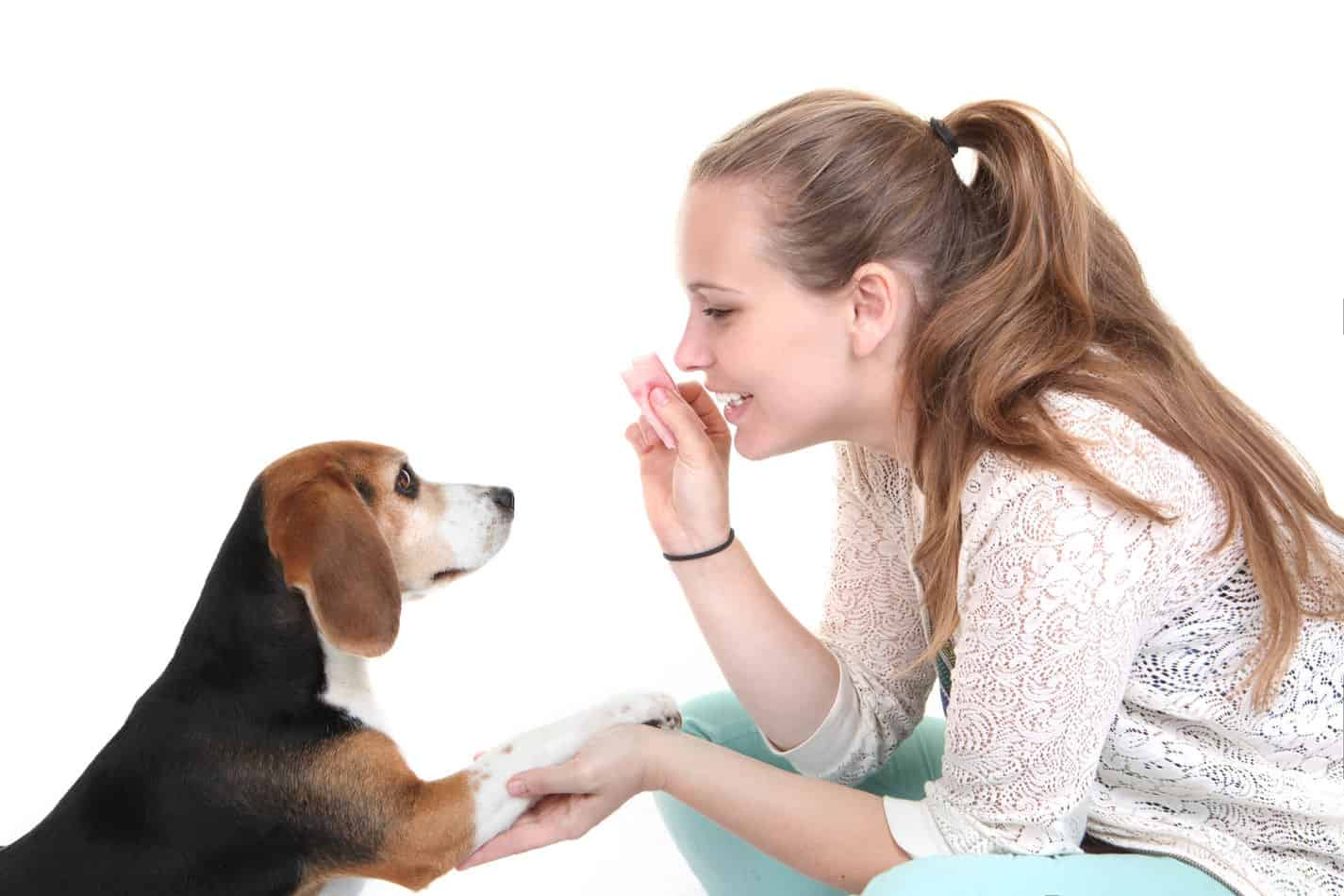 Are Beagles Easy to Train?