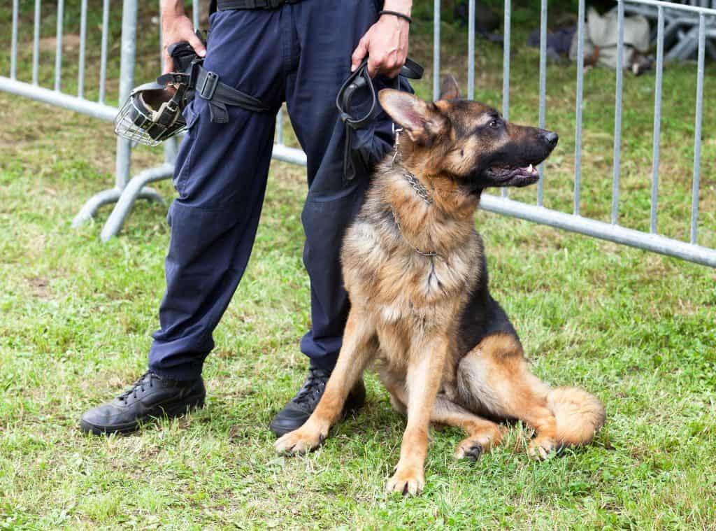 Are German Shepherds Easy To Train Embora Pets