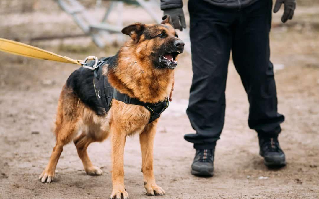 How Often Do German Shepherds Bark?