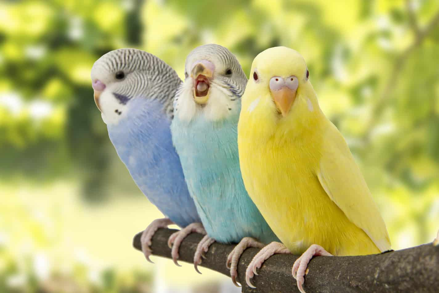 How Much Do Pet Parakeets Cost? What About the Accessories?