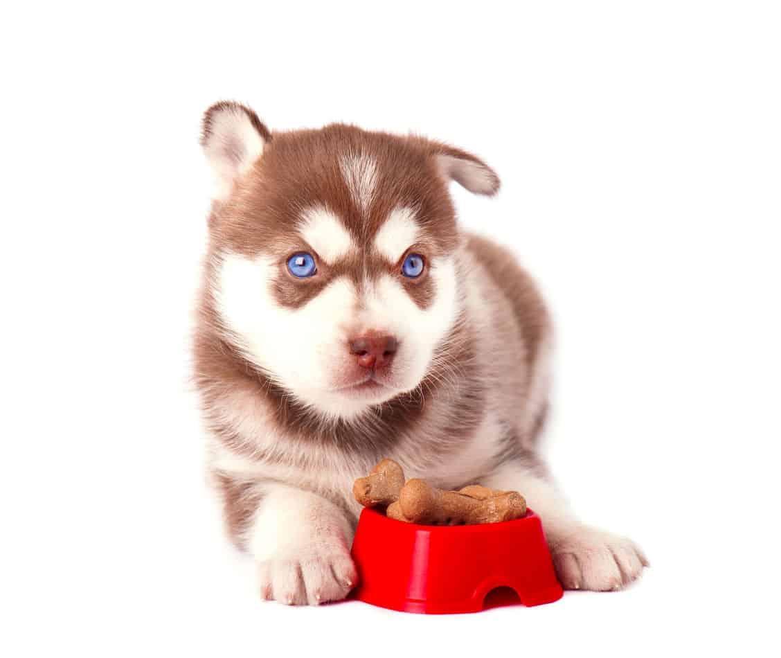 Can Huskies Chew on Bones?