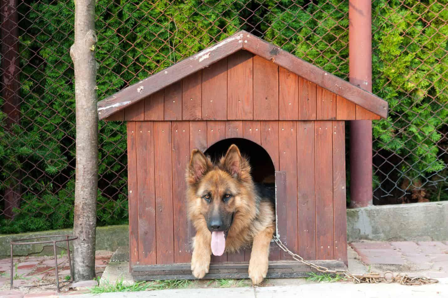 Can German Shepherds Live Outside Embora Pets