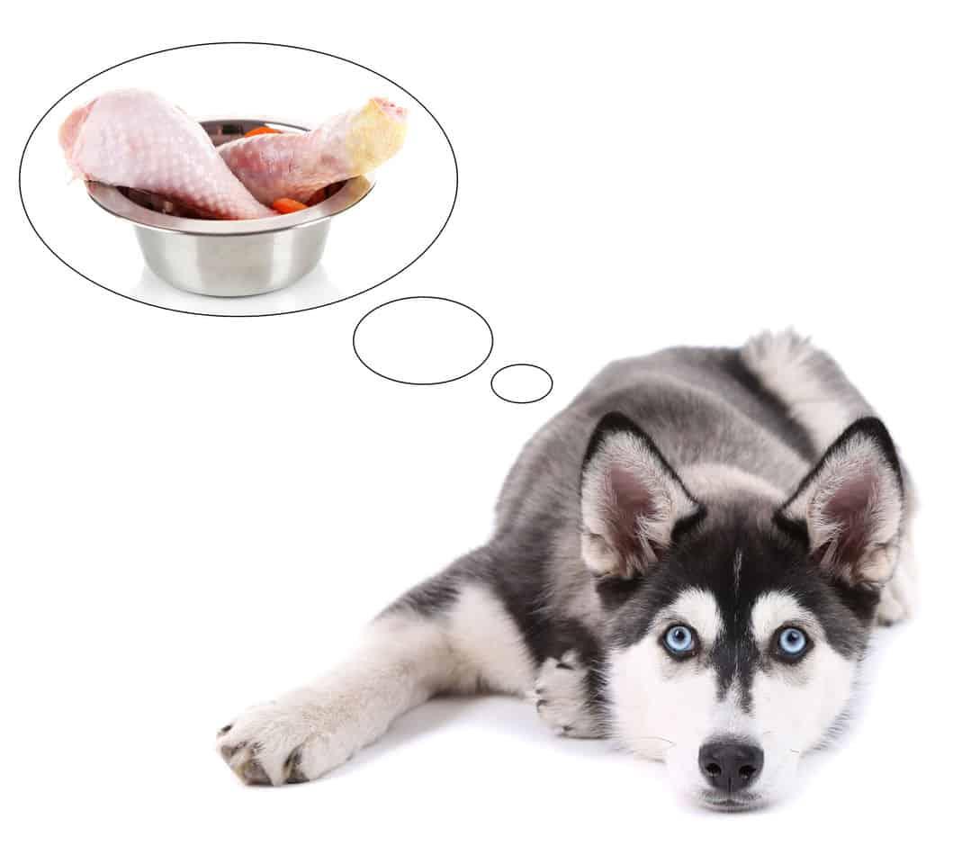 Can Huskies Eat Chicken?