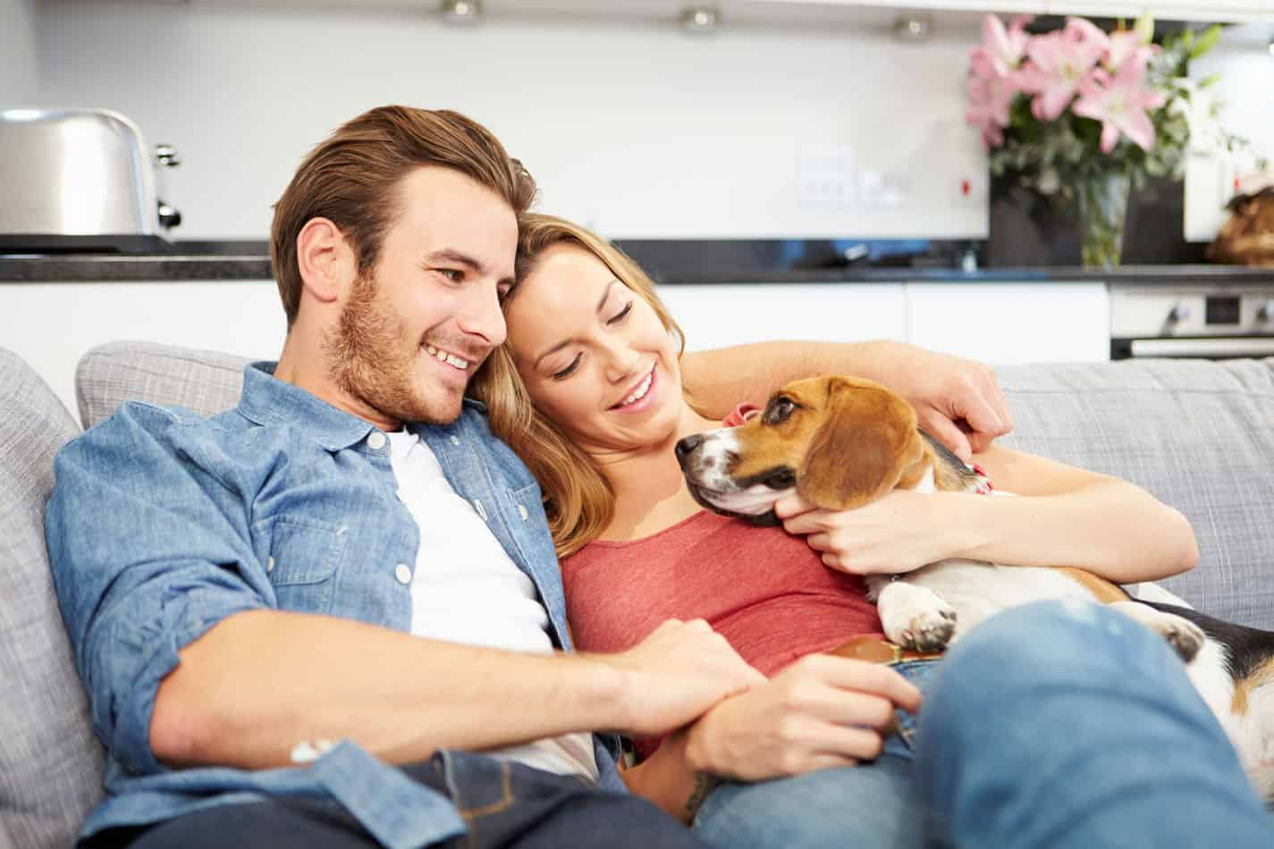 Can Beagles Live in Apartments? A Complete Guide.