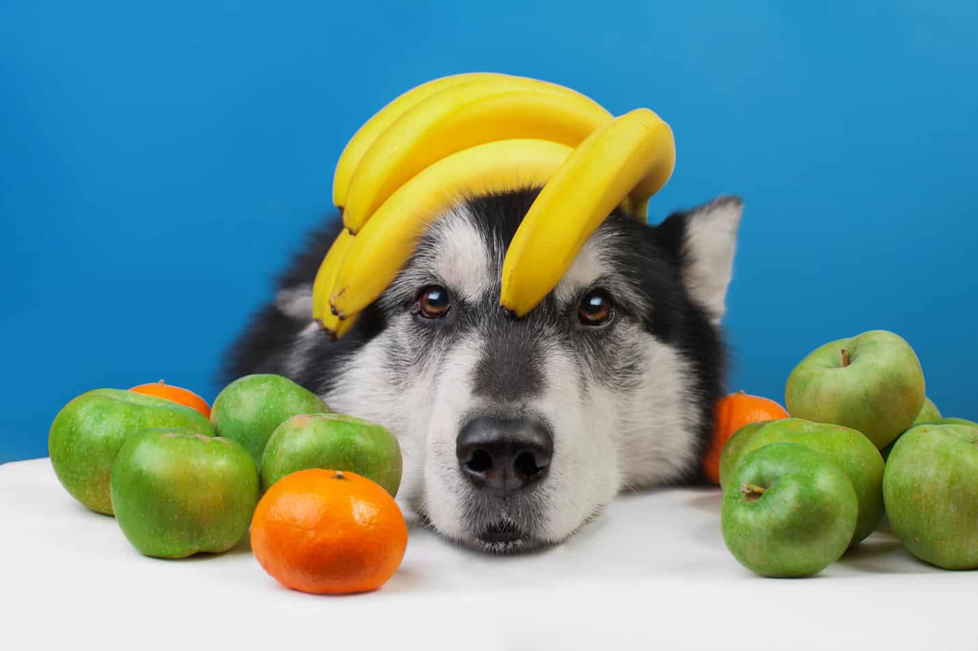 Can Huskies Eat Bananas?