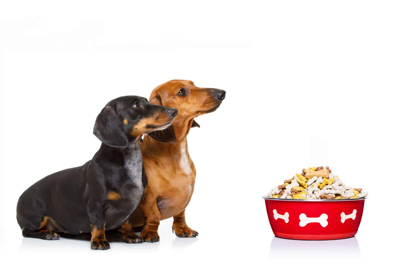 The Ultimate Guide to What Dachshunds Can (and Can't) Eat