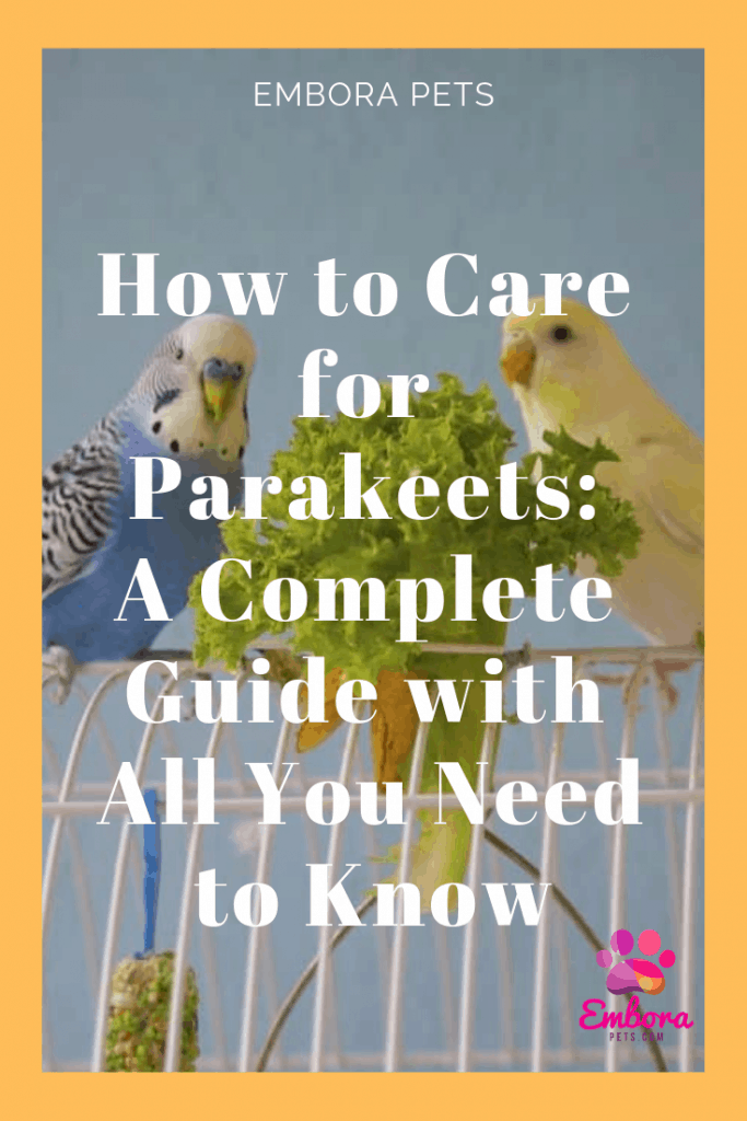 How to Care for Parakeets: A Complete Guide With All You