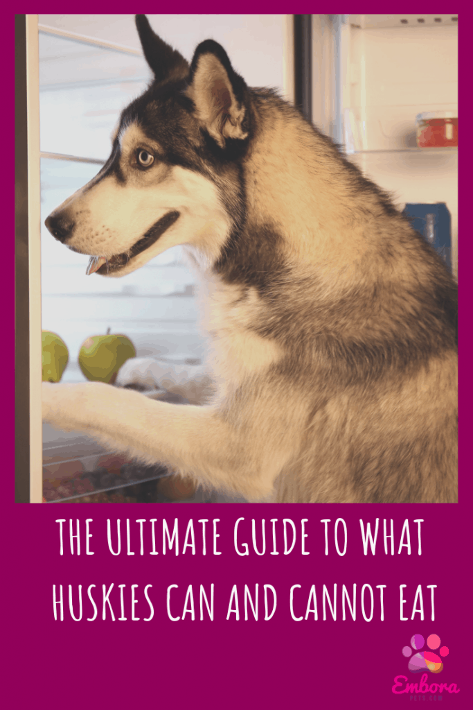 The Ultimate Guide to What Huskies Can (And Can't) Eat