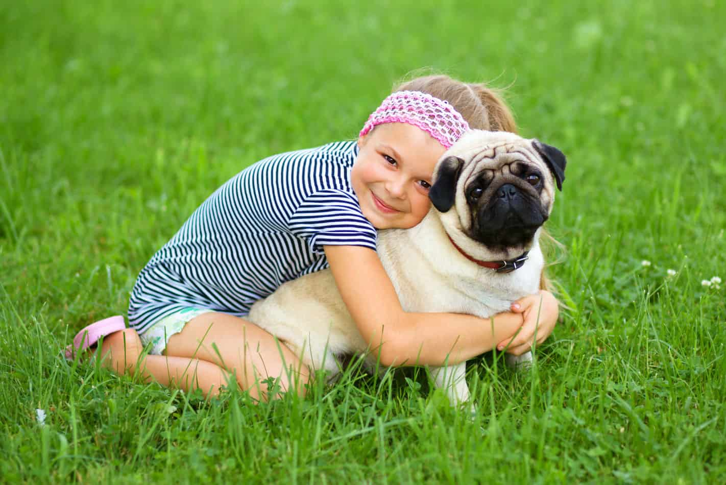 Are Pugs Hypoallergenic? Tips for Families with Allergies
