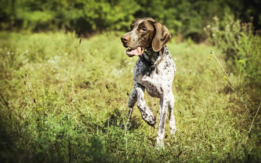 Are Pointers Easy to Train?