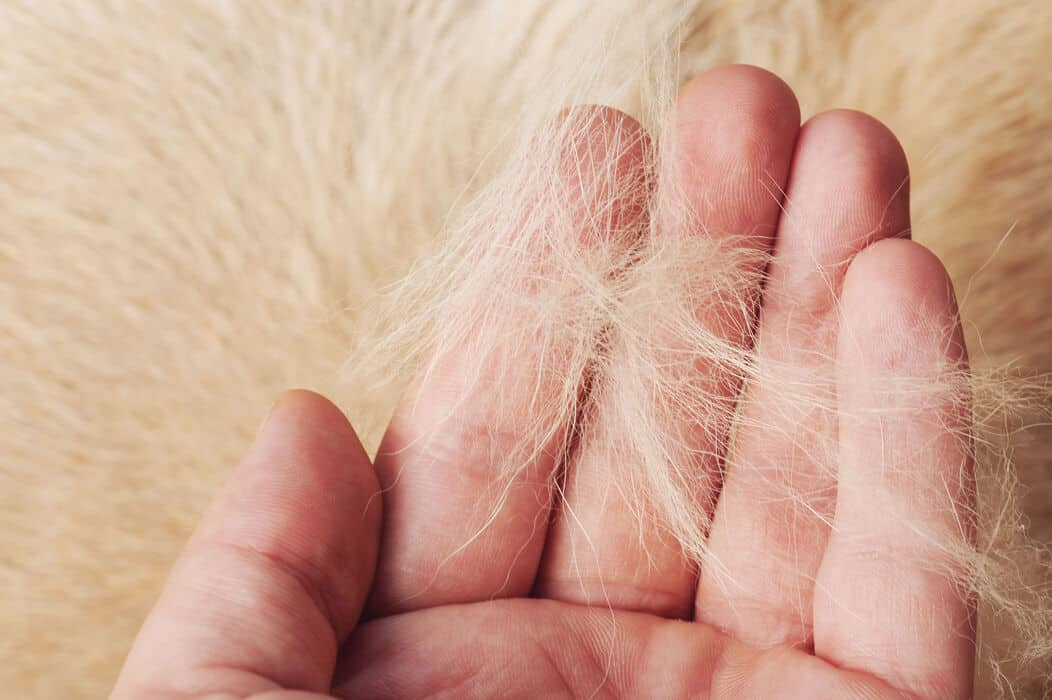 Dog Hair in Human Palm