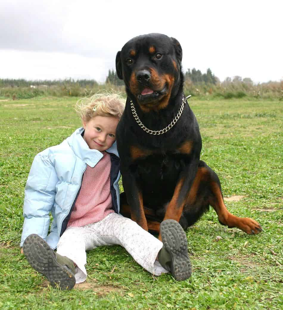 Are Rottweilers Hypoallergenic? Tips for Families with Allergies.