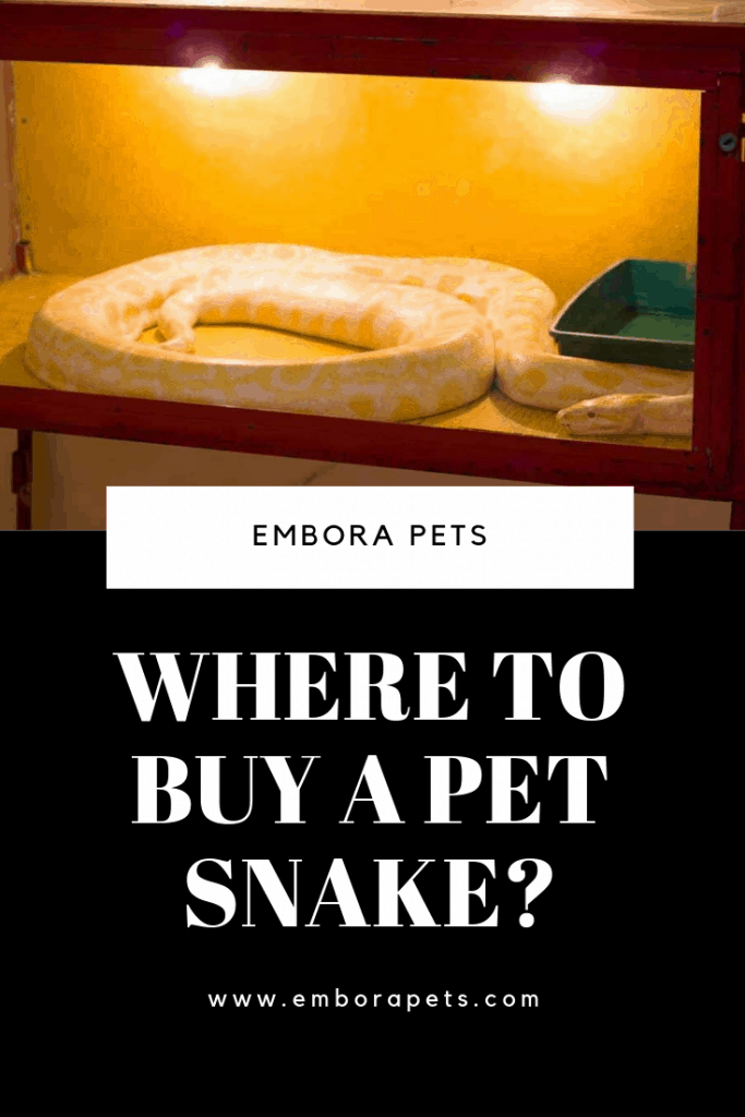 Where to Buy a Pet Snake