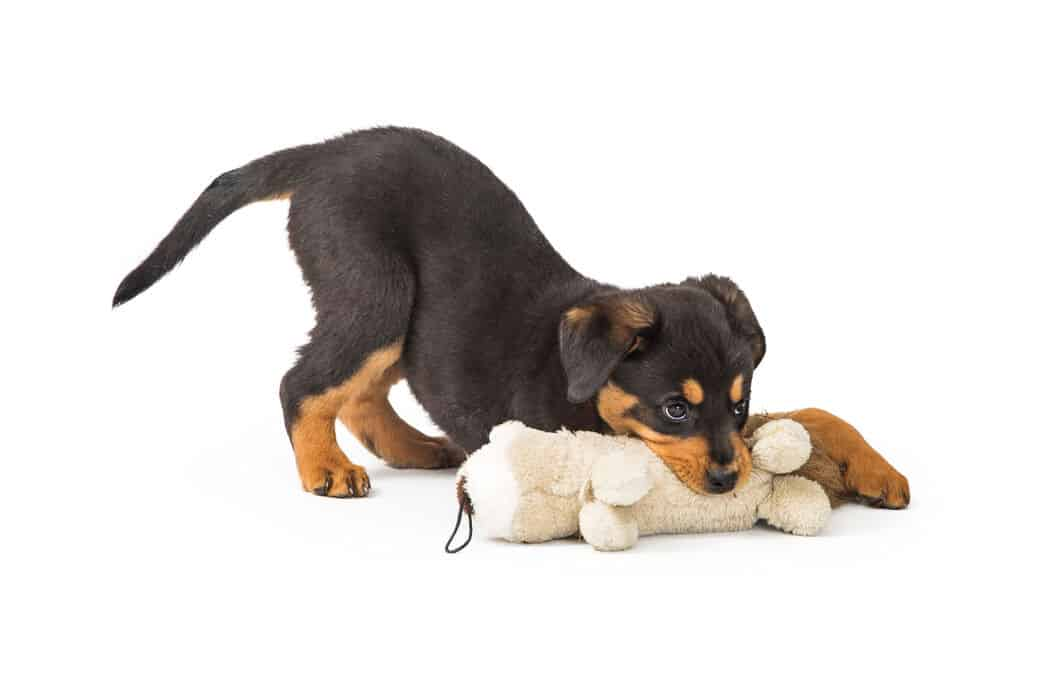 How to Get Rottweilers to Calm Down