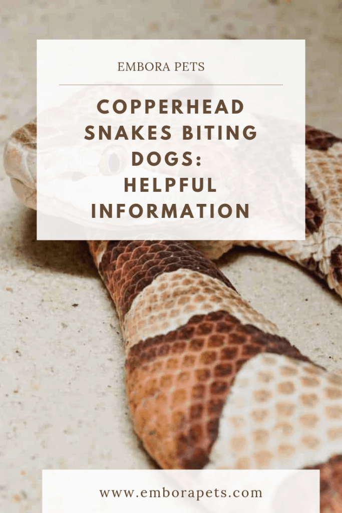 Copperhead Snakes Biting Dogs: Helpful Information