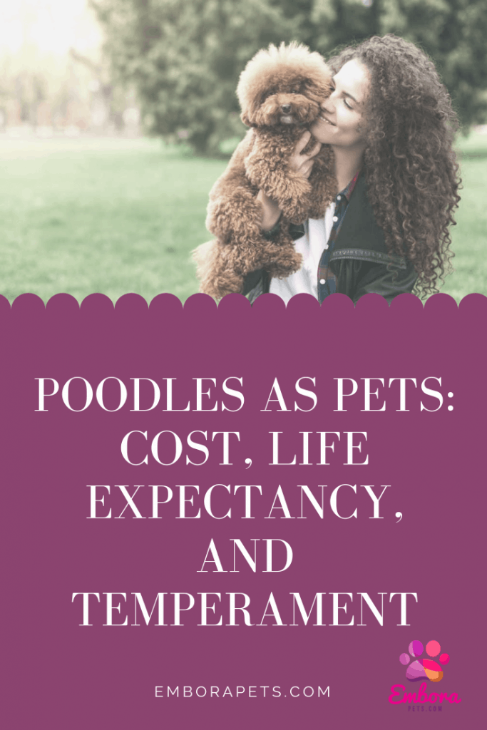 Poodles As Pets Cost Life Expectancy And Temperament