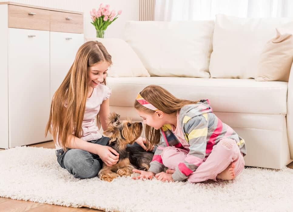 Are Yorkshire Terriers Good with Kids? A Guide for Parents.