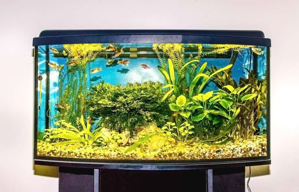 How to Calculate the Weight of Your Full Aquarium