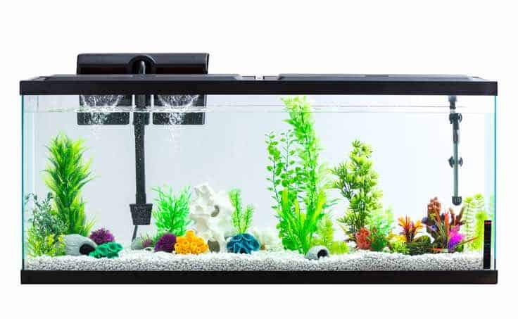 Aqua Culture Aquarium Starter Kit (55 Gallons) for sale at Walmart