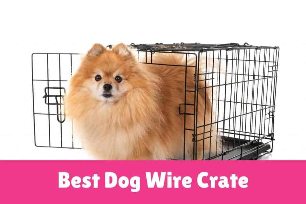 Best Dog Wire Crate