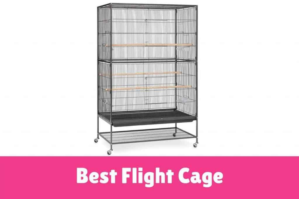 Best bird Flight cage