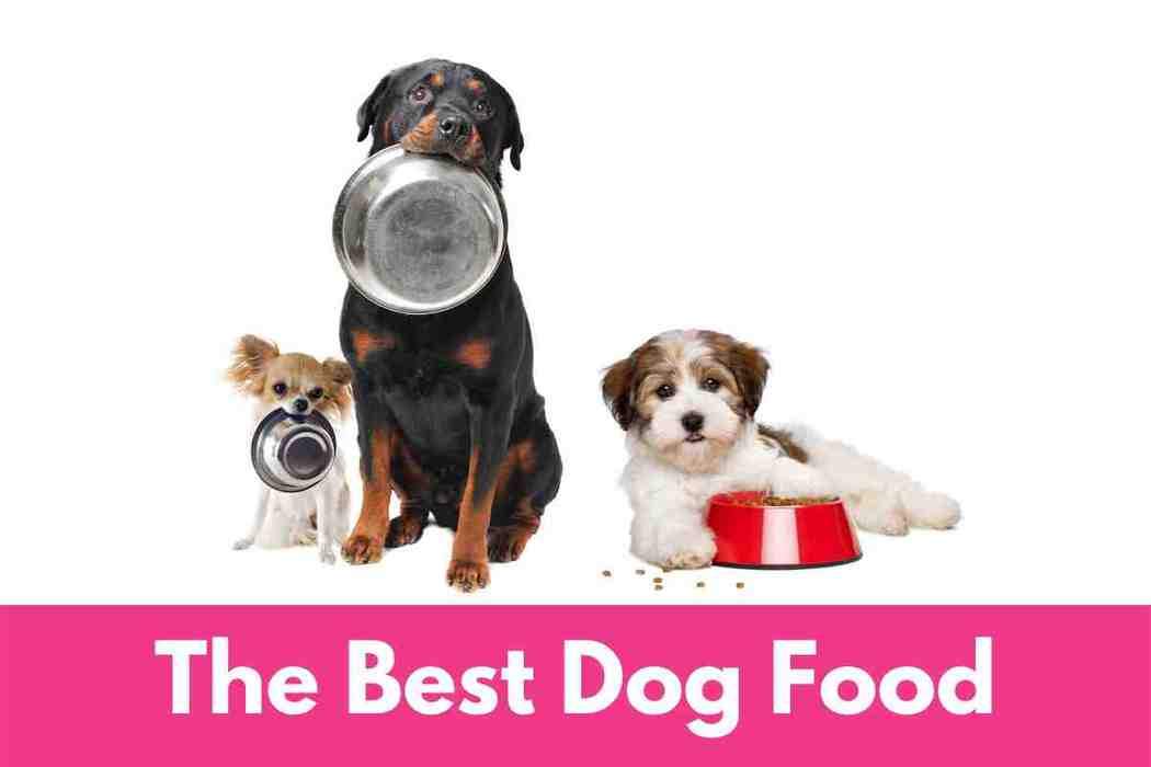 The Best Dry Dog Food