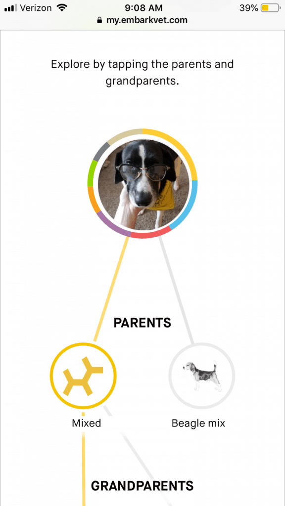 How To Identify The Breed Of Your Dog Through DNA Testing: Complete Guide To DNA Testing Your Pet