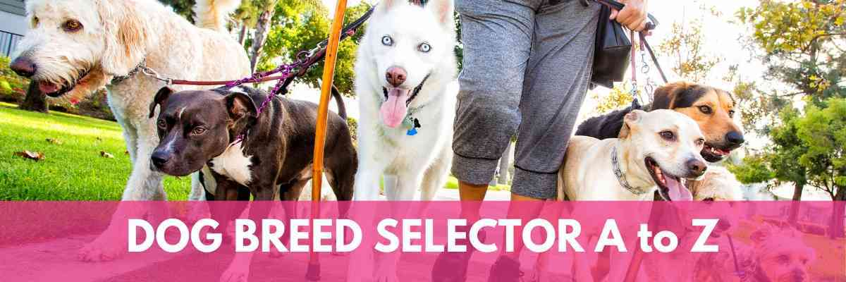 Find the perfect dog with our Dog Breed Selector A to Z #dogs #puppies