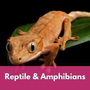 Reptile and Amphibian Supplies