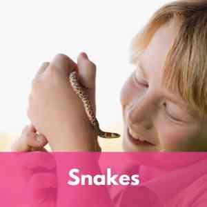 snake Supplies