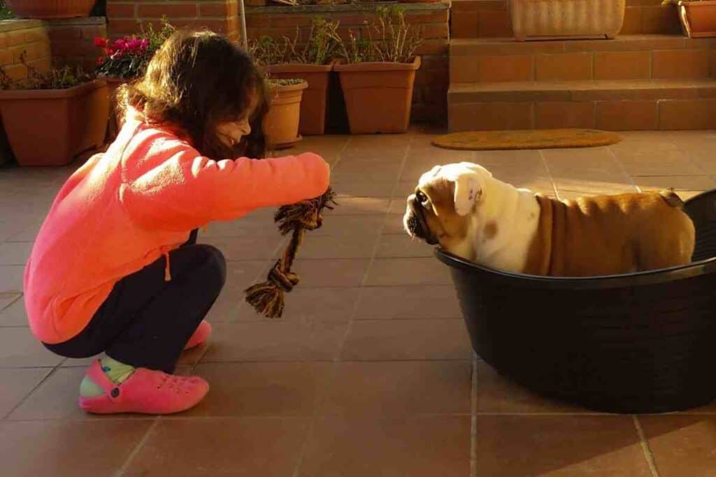 Do English Bulldogs make good pets for families with children?