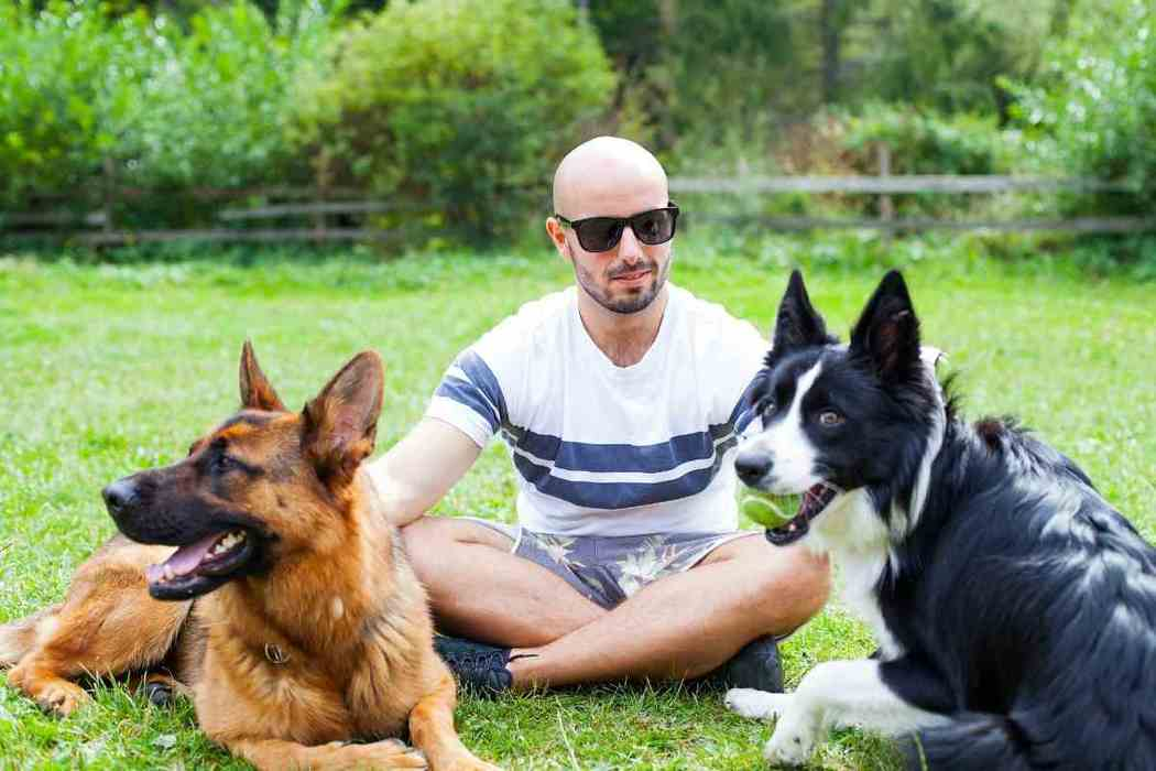 Why Do German Shepherds Smell Bad?
