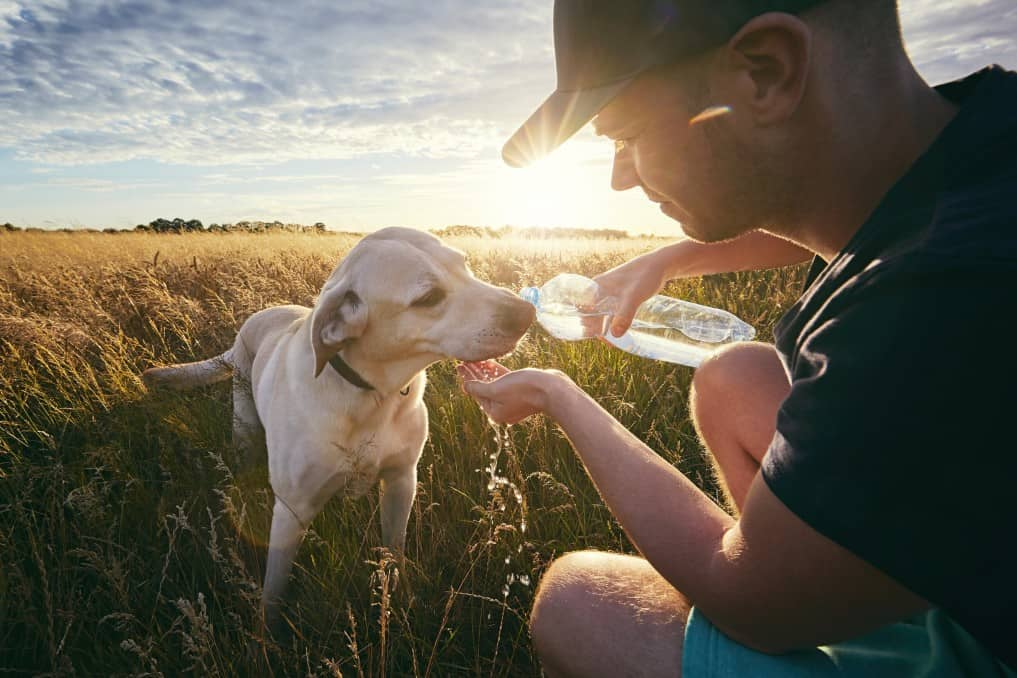 This image has an empty alt attribute; its file name is young-man-with-dog-at-sunset-in-summer-nature-thirsty-yellow-labrador-retriever-drinking-water-from_t20_6lPOw2.jpg